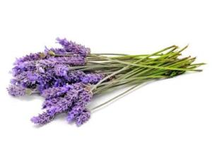 HE_lavender_s4x3_lead