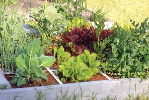 In square-foot gardening, you create a grid and plant crops in 1-by-1-foot squares. DAVID LIEBMAN