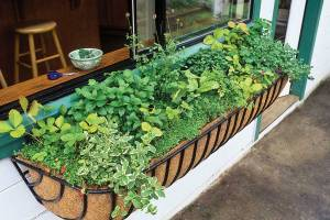 Enjoy the beauty and convenience of a window box herb garden right outside of your kitchen window. SAXON HOLT