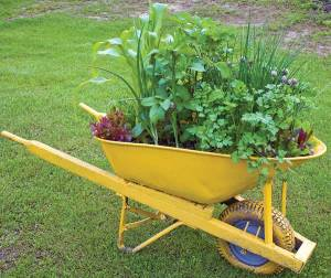 Get creative by planting wherever you can! You can even turn a wheelbarrow into a mini-garden. JERRY PAVIA