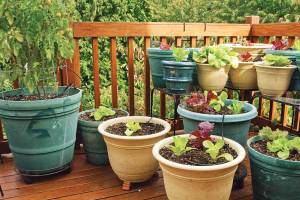 If a deck or balcony is the only space where you can grow, go crazy with containers. JANET HORTON
